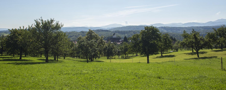 Hochstamm_Suisse_Shop_Titelbild