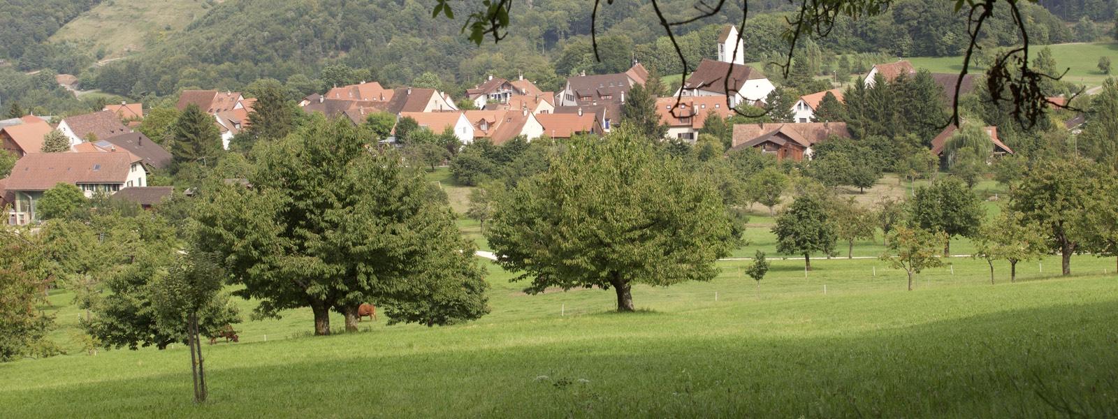 Hochstamm_Suisse_Baumpatenschaften